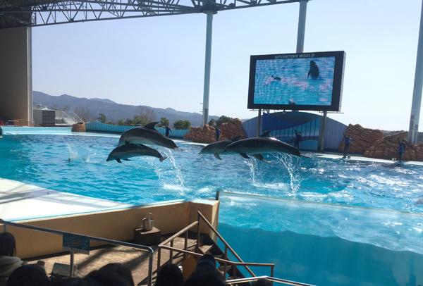 イルカとクジラのショー